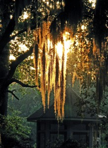 Spanish Moss Sunset, Hilton Head Island, South Carolina
